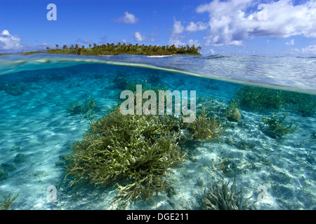 Split image of staghorn coral, Acropora sp., and uninhabited island, Ailuk atoll, Marshall Islands, Pacific - Stock Photo