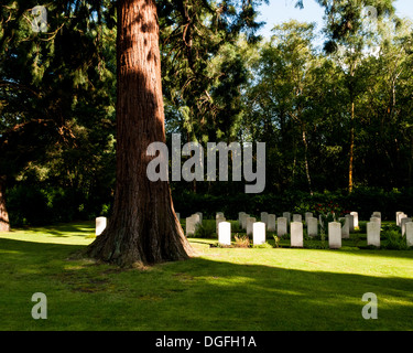 Brookwood Military Cemetery And Memorials, Brookwood, United Kingdom. Architect: Unknown, 2013. - Stock Photo