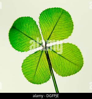 a traditional good luck symbol the four leaf clover  Jane Ann Butler Photography  JABP1057 - Stock Photo