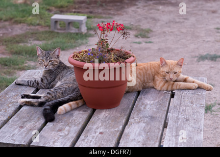 Two cats relaxing on a table - Stock Photo