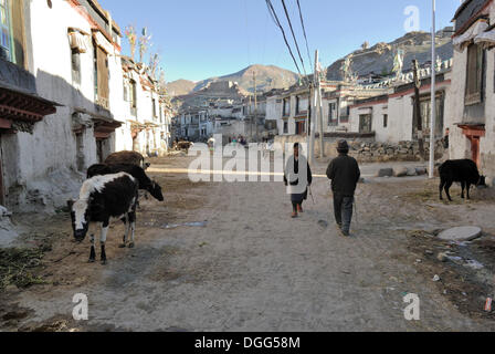 Houses in the old town of Gyantse, Gyangze, Tibet, China, Asia - Stock Photo