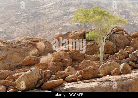 Mountain landscape along a trail to the White Lady rock painting in the Tsisab Gorge, Brandberg, Damaraland, Namibia, - Stock Photo