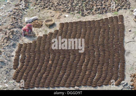 Woman producing fuel from cow dung, drying in the sun at Sangam, Allahabad, India, Asia - Stock Photo