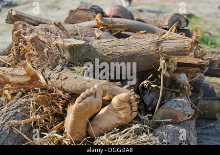 Putting a dead body on firewood on the banks of river Yamuna as part of a cremation ceremony, Vrindavan, India, - Stock Photo