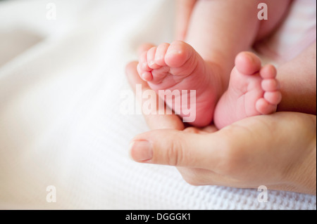 Mid adult woman holding baby girl's feet, close up - Stock Photo