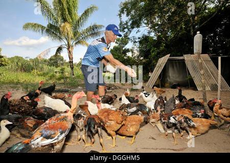 Old farmer feeding the chickens in front of his hovel, landless camp Acampamento 12 de Otubro, Brazilian Landless - Stock Photo
