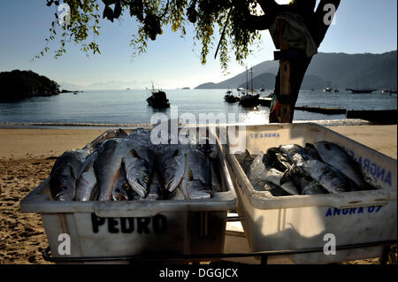 Ice-cooled fish for sale at the beach, Ilha Grande, state of Rio de Janeiro, Brazil, South America - Stock Photo