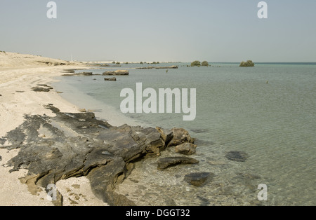 Remote beach with rocks sand and sea at high water with isolated mature and young grey mangroves Arabian Gulf Abu - Stock Photo