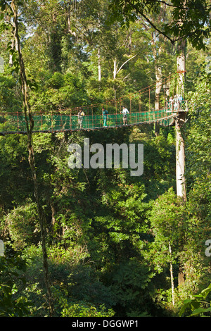 Tourists and guides walking across canopy suspension bridge in Dipterocarp tropical lowland rainforest at the Borneo - Stock Photo