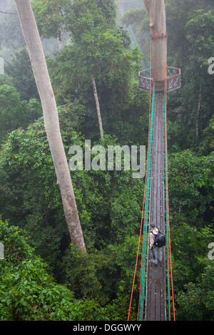 Ecotourist on canopy walkway with observation platform in tropical lowland rainforest at the Borneo Rainforest Lodge - Stock Photo