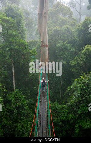 ... Ecotourist on canopy walkway in tropical lowland dipterocarp rainforest at the Borneo Rainforest Lodge - Stock & Canopy walk in the Danum Valley Conservation Area Borneo ...