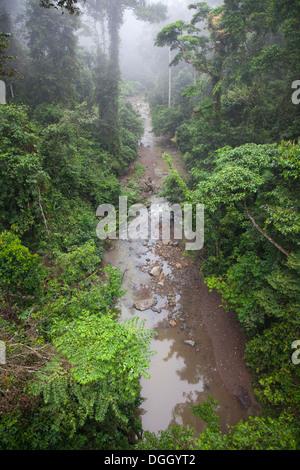 Stream flowing through Dipterocarp tropical lowland rainforest - Stock Photo