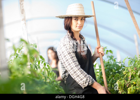 Young woman working in vegetable greenhouse - Stock Photo