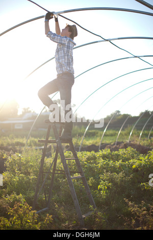Young man working on maintenance of greenhouse Stock Photo