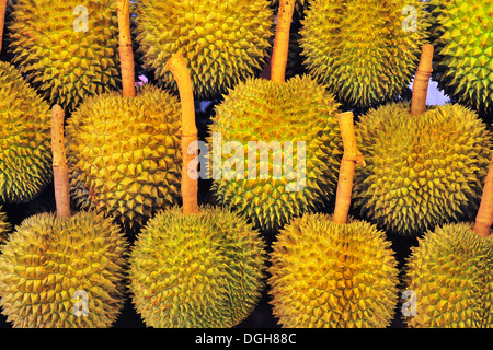 Tropical fruit - Expensive Thai Durian - Stock Photo