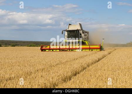 Claas combine harvester harvesting Barley (Hordeum vulgare) 'Flagon' crop in coastal farmland with Sheringham Shoal - Stock Photo