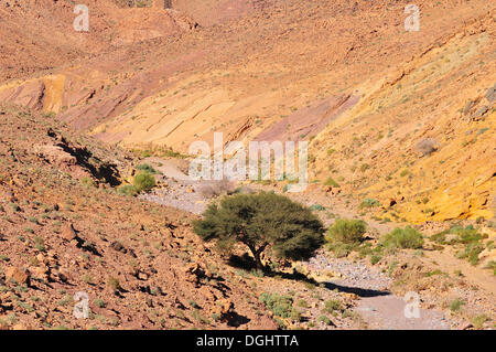 Typical landscape with a dry river bed, Oued, Anti-Atlas, Souss-Massa-Draâ region, Morocco - Stock Photo