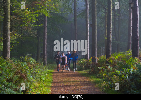 Four young men on a training run in woodland. - Stock Photo