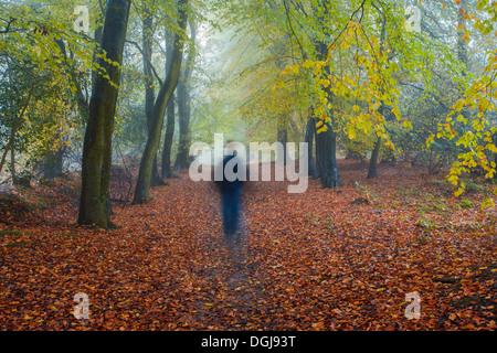 A  man walking through autumn woodland. - Stock Photo