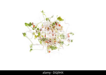 Close up of bundle of mixed micro salad seeds and germinating shoots with shallow depth of field isolated on white background.