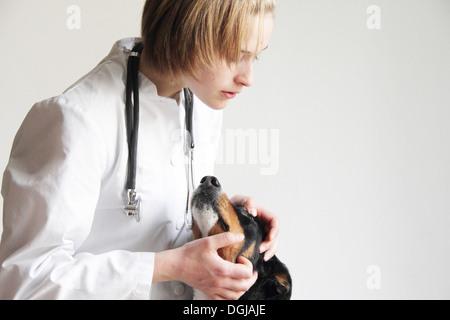 Female veterinarian examining dogs eye - Stock Photo