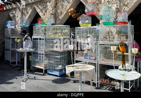 Animal market in Souq al Waqif, the oldest souq or bazaar in the country, Doha, Qatar, Arabian Peninsula, Persian - Stock Photo
