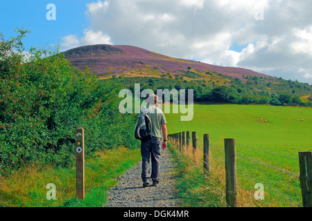 Caucasain Man Walking the St Cuthbert's Way Towards the Eildon Hills, Borders, Scotland, UK MODEL RELEASED - Stock Photo