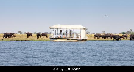 Botswana Safari - Tourists on a boat safari looking at a herd of buffalo, Chobe river cruise, Chobe national park, Botswana, Africa
