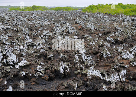 Lava formations, Isabela Island, Galapagos Islands, UNESCO World Natural Heritage Site, Ecuador, South America - Stock Photo