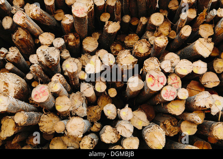Timber industry wood log logs trees yard logging export for Pine tree timber