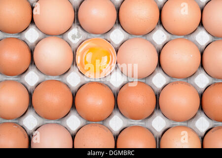 Single egg broken open between other eggs on an egg tray, Germany - Stock Photo