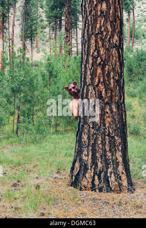 A man standing behind a Ponderosa Pine tree, peering around the trunk wearing a bear mask. - Stock Photo