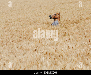 Wheat fields in Washington. A person wearing a horse head animal mask emerging above the ripe corn. - Stock Photo