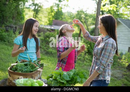 Organic farm. Summer party. A woman feeding a young girl fresh picked cherries. - Stock Photo