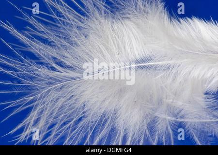 feather, plume, down feather, Daunen, Dunen, Daunenfeder, Vogelfeder, Federäste, Lupe, loupe - Stock Photo