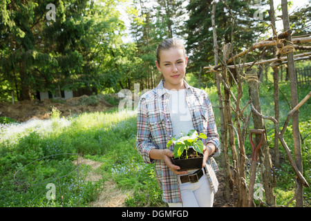 A girl in a checked shirt holding a plant with bright green leaves in a plant pot. An fenced off enclosure. - Stock Photo