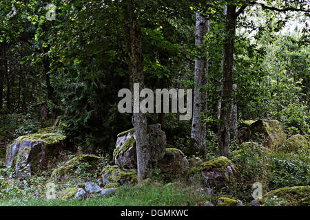 Large boulders covered with moss in a forest, Smaland, nature reserve, Sweden, Europe - Stock Photo