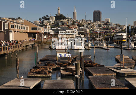 Pier 39. Coit Tower and Transamerica Building in the backdrop, San Francisco, California, United States - Stock Photo