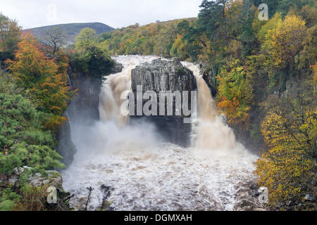 UK Weather 23 October 2013.  Autumn Colours and the River Tees in Flood at High Force After Heavy Overnight Rain - Stock Photo