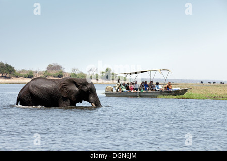 Tourists on an africa safari watching an elephant crossing the Chobe river, Chobe National Park, Botswana Africa - Stock Photo