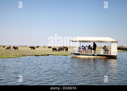 Tourists on a Chobe river cruise safari watching a herd of buffalo, Chobe National Park, Botswana Africa - Stock Photo