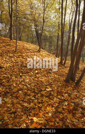 Autumn park background, HDRI - Stock Photo