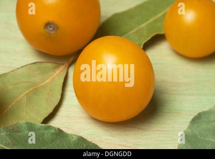 Yellow grape tomato close up - Stock Photo