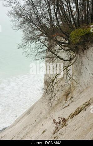 Chalk cliffs in Jasmund National Park, Ruegen, Mecklenburg-Western Pomerania - Stock Photo