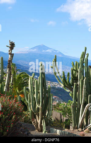 Cactus garden in El Sauzal with views of Mount Teide volcano, Tenerife, Canary Islands, Spain, Europe - Stock Photo