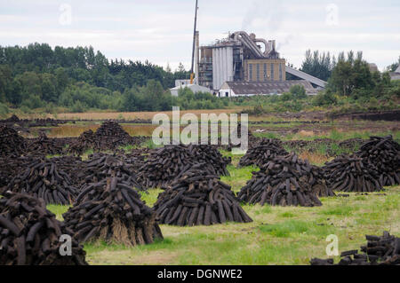Peat briquettes stacked to dry on piles in front of a peat briquettes factory, near Birr, Offaly, Midlands, Ireland, - Stock Photo
