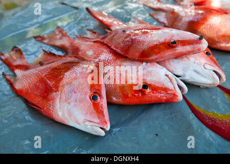 Fish for sale, fish market at the Anse Royale, Mahe, Seychelles, Africa, Indian Ocean - Stock Photo