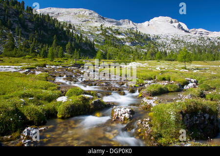 Flowing stream on an alpine pasture, Fanesalm, South Tyrol, Italy, Europe - Stock Photo