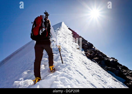 Mountain climber ascending Hochfeiler Mountain along the summit ridge, Pfitschtal, South Tyrol province, Trentino - Stock Photo