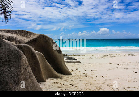Beach, Anse Georgette, Praslin, Seychelles, Indian, Ocean, Africa - Stock Photo
